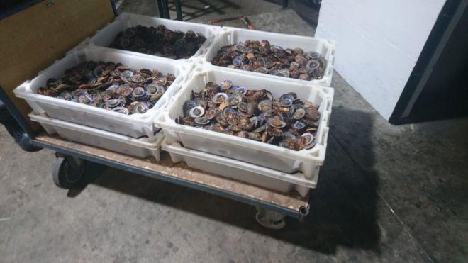 La Policía Local retira 80 kilos de lapas que eran transportadas sin refrigerar