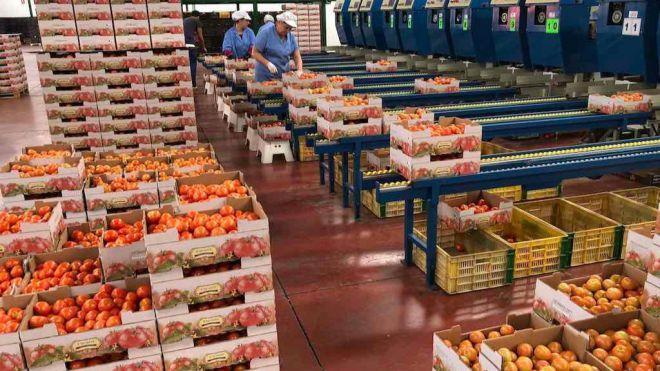 Alarma entre los exportadores hortofrutícolas por el acuerdo entre Marruecos y el Reino Unido