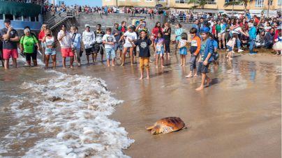 Devuelven dos tortugas al mar en Las Canteras tras curarlas en el Centro de Recuperación