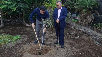 Telde realizará 1.000 nuevas plantaciones durante la semana del árbol