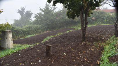 Canarias en Movimiento apuesta por un Plan de Soberanía Alimentaria que sea ambicioso