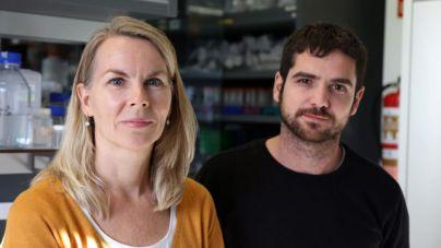 Investigadores del HUC descubren la función reguladora de un gen para evitar daño en el ADN