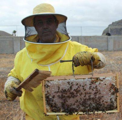 Mieles Maraseo del apicultor Juan Félix Díaz obtiene el premio a la Mejor Miel de Gran Canaria