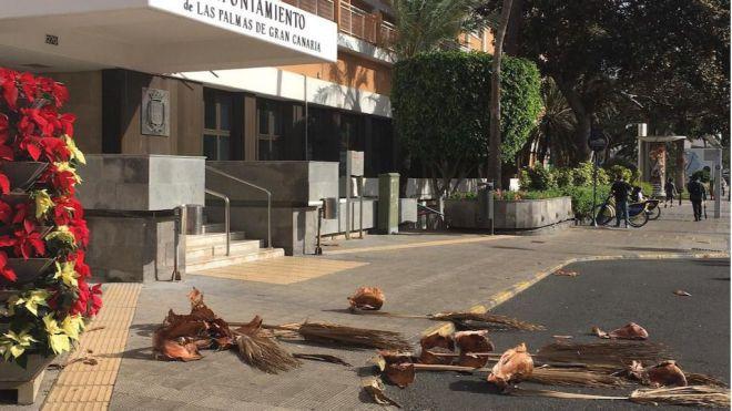 Cs denuncia el nulo o escaso mantenimiento del arbolado en Las Palmas de Gran Canaria