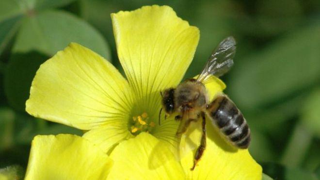 La abeja negra canaria como elemento para la lucha contra el cambio climático