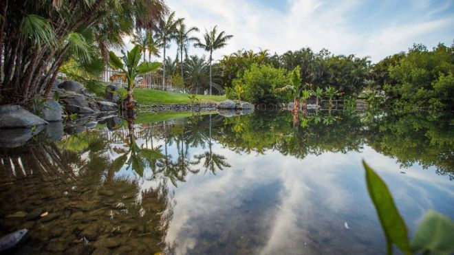 Santa Cruz celebra el sexto cumpleaños del Palmetum