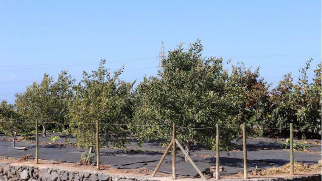 Comienza el proyecto Vercochar que investiga la regeneración de los suelos agrarios y forestales mediante compost