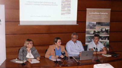 La gallina local de Canarias podrá ser considerada raza autóctona