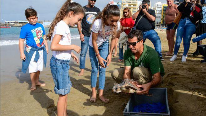 Las tortugas atrapadas en 17 kilos en redes rescatadas en el Confital por un corredor comienzan su nuevo viaje en el océano