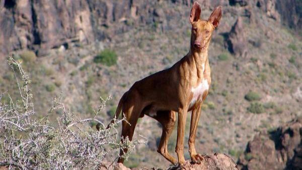 El Cabildo convoca las pruebas de aptitud para la obtención de la licencia de caza