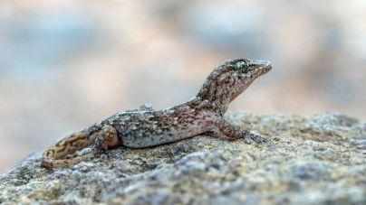 Transición Ecológica actualiza el Banco de Datos de Biodiversidad de Canarias con una treintena de nuevas especies