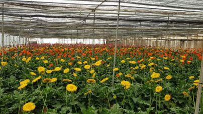 El sector de las flores estima perdidas demás de 1,5 millones esta primavera