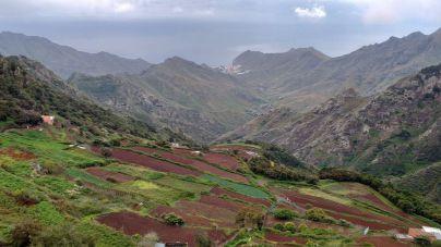 Canarias garantiza el abono completo del POSEI adicional de 2019