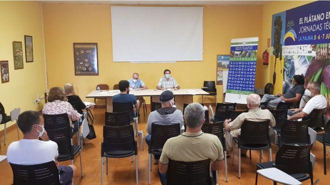 Agricultura sienta las bases para el despegue del cultivo del olivo y la producción de aceite en La Palma
