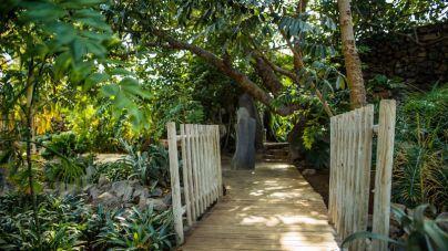Santa Cruz estrena nueva Ruta Etnobotánica en el Palmetum
