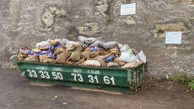 Los Realejos vuelve a habilitar dos contenedores para el desecho controlado de papas afectadas por la polilla