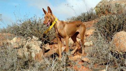 El Cabildo informa de la modificación de las épocas hábiles de caza en Lanzarote