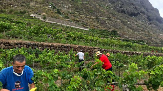 El sector primario deja en Canarias cerca de 1.400 contratos, un 63% más que en mayo