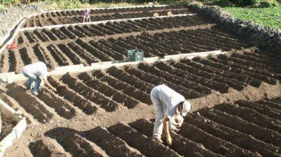 El Cabildo destina 470 mil euros a incentivos para el sector primario de La Gomera
