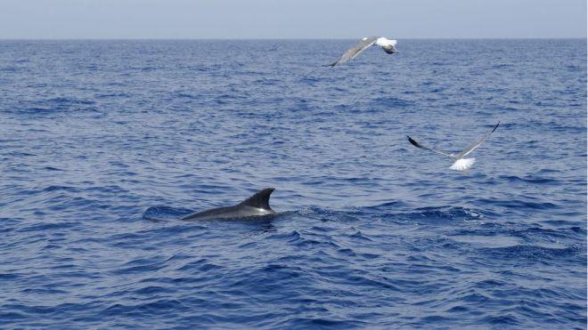 Tenerife acoge desde el día 11 el I Congreso Internacional de Avistamiento de Cetáceos