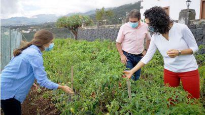 La Palma conserva 300 tipos de semillas de diferentes variedades agrícolas tradicionales