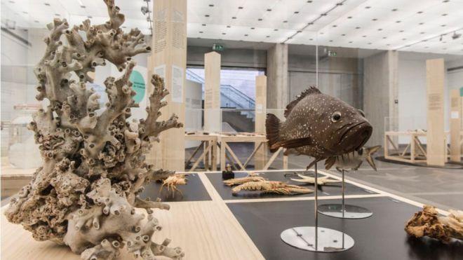 Museos de Tenerife celebra su 30 aniversario con un boletín sobre sus hitos más destacados