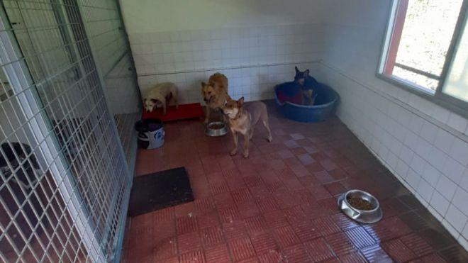 El Ayuntamiento de Tacoronte ha puesto de nuevo en funcionamiento el Refugio Municipal de Animales