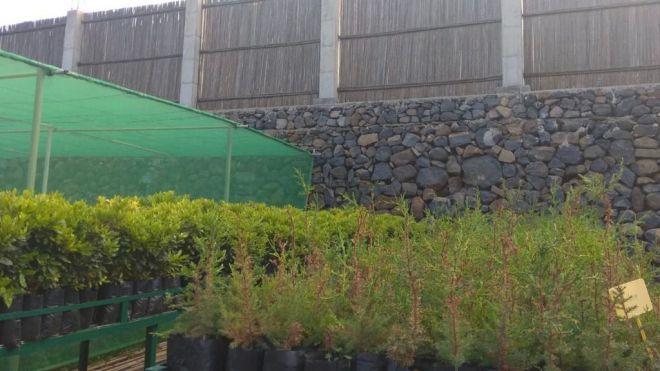 El Cabildo promueve la plantación de especies nativas para luchar contra la pérdida de suelo