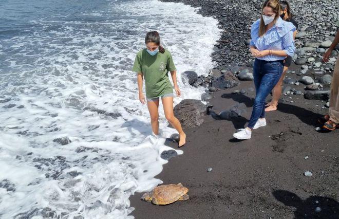 La Palma libera un ejemplar de tortuga boba rehabilitada en el Centro de Fauna Silvestre