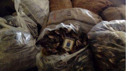 Inspección Pesquera se incauta de más de 480 kilos de marisco y pescado ilegal durante la Semana Santa