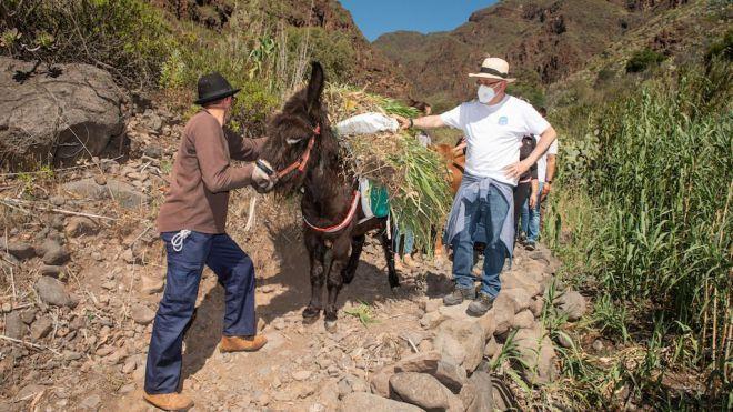 El Camino de las Bestias llegará hasta la desembocadura del Barranco de Guayadeque