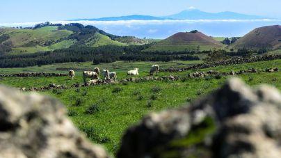 El Cabildo somete a consulta la Ordenanza que definirá la aplicación de la Ley de Islas Verdes en suelo rustico