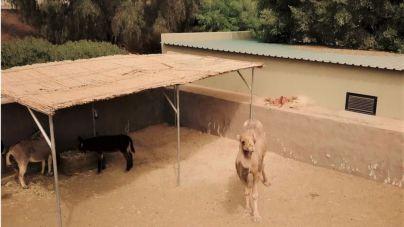 The Animal Academy estrena su nuevo hogar gracias a la implicación del Cabildo