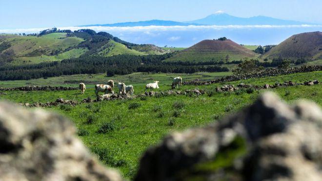 El Gobierno y el Cabildo de El Hierro monitorizan hábitats de interés comunitario de la Isla
