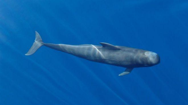 El Gobierno de Canarias impulsa la creación de un Corredor Oceánico Mundial