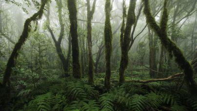 El Cabildo invierte casi un millón de euros en la mejora del monteverde de la isla