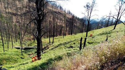 Finalizan los trabajos de restauración ambiental en la zona afectada por el incendio de Gran Canaria