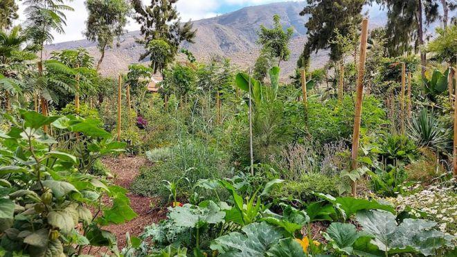 El Bosque productivo de Adeje destina parte de su producción al Banco de Alimentos municipal