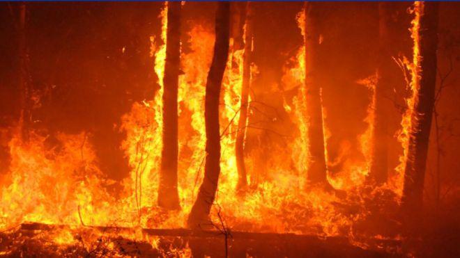 Situación de Alerta Máxima por Riesgo de Incendios Forestales
