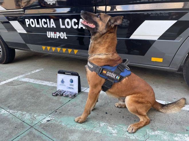 Los guías caninos realizan 80 actas por tenencia de drogas durante el mes de agosto