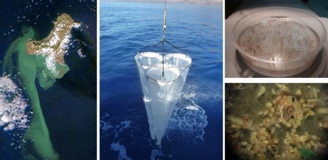 El volcán Tagoro modificó la abundancia y estructura de la comunidad de zooplancton