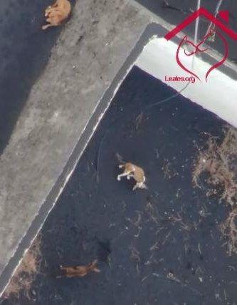 Aerocamaras tiene listo un sistema para rescatar a los perros del estanque del volcán
