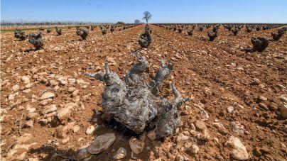 La cagada de la alimentación sostenible
