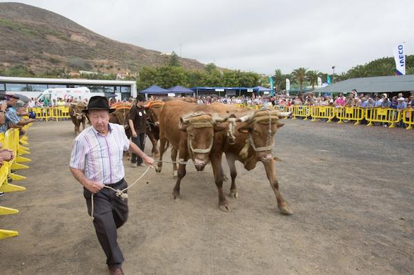 La Feria del Ganado de Gran Canaria se convierte en la fiesta del sector primario