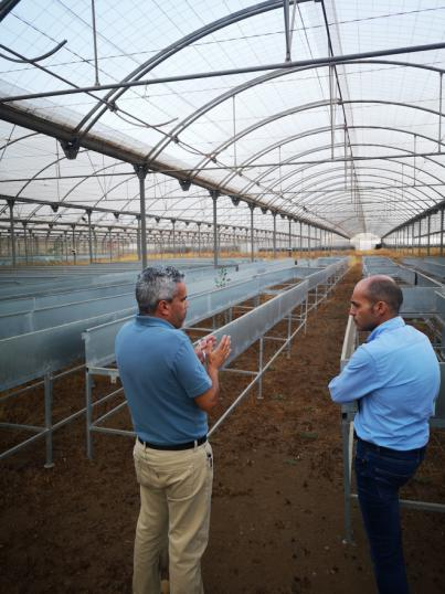 Avanza el Plan de Regeneración del cultivo de piña tropical en El Hierro