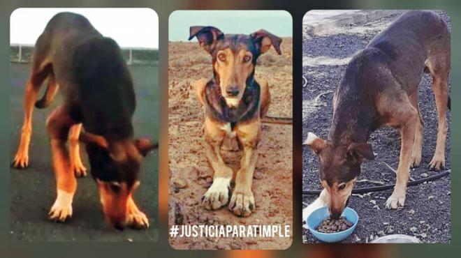 Medio millón de firmas pide 'justicia real' para el perro Timple