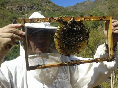 La Abeja del Guanche, dos estrellas por su miel en el Great Teaste de Reino Unido