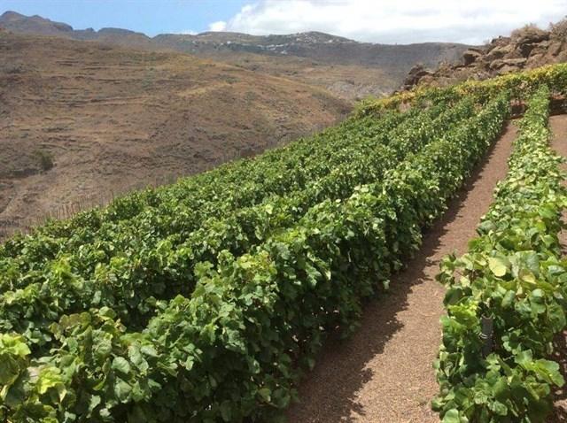 Canarias convoca las ayudas del POSEI estatal de 2011 por 6,8 millones