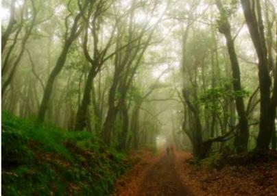 La revista 'Viajar' destaca la naturaleza y el eterno verano de La Gomera