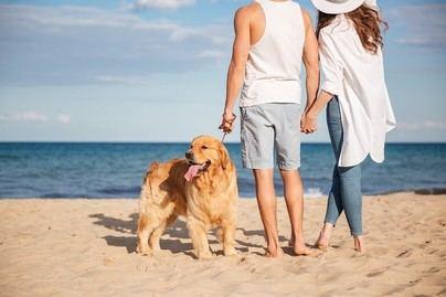 Casi siete millones de españoles viajan con su perro